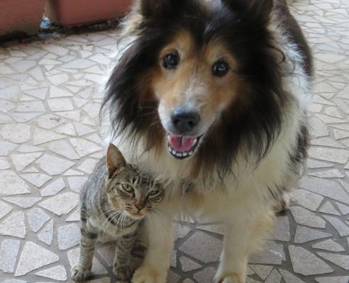 実家の猫の、その後・・・